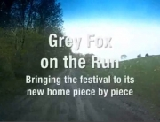 moving-grey-fox-video